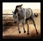 Power Horse