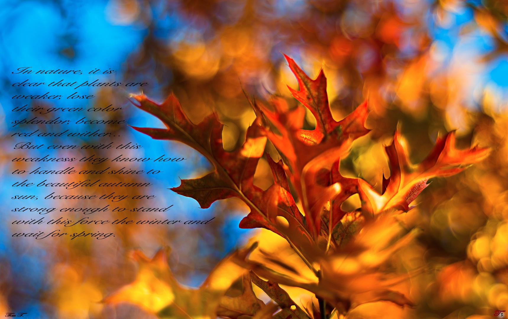 Power of Autumn