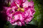 powerful blossom ..