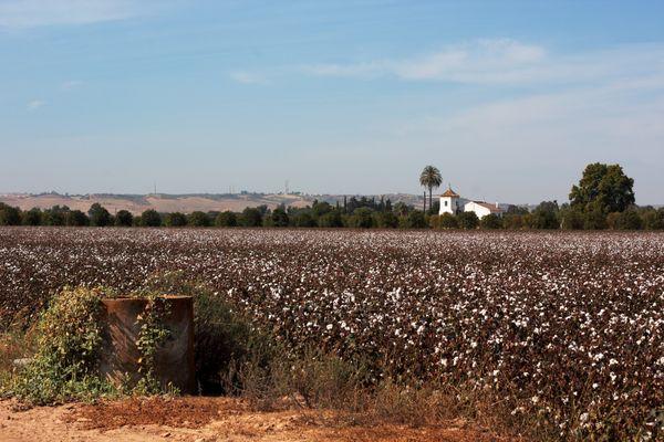 pozo, campo de algodón y cortijo