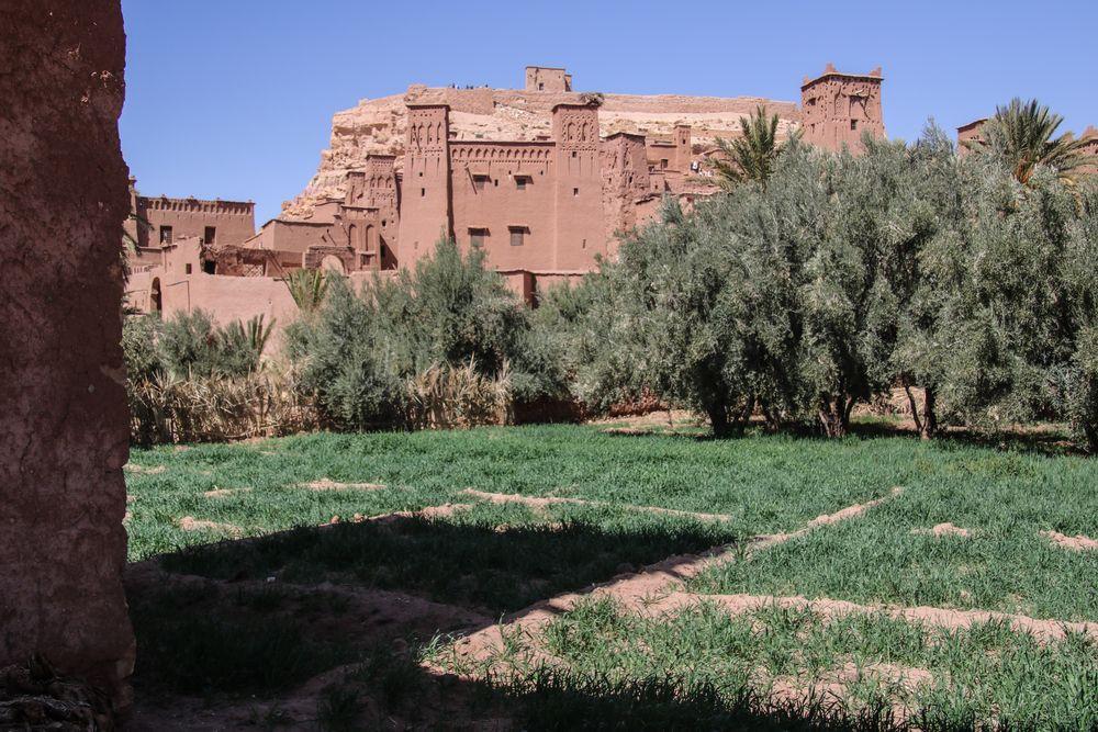 PP Kasbah Oliven Maroc K-54