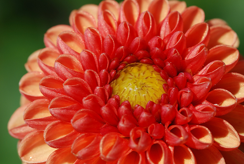 Prachtblüte 2