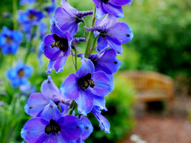 Prachtvolles Blau!