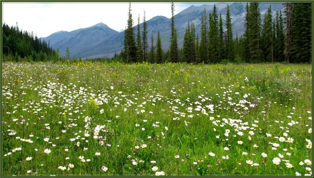 Prairie - Ouest canadien