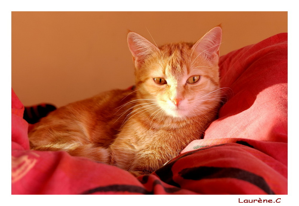 Praline, ma rouquine et mon avatar version cat ! ^^