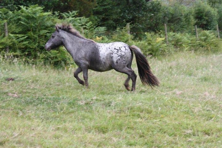 Precioso pony de unos familiares