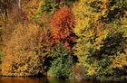 prémice d'automne