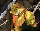 Prémices d'automne