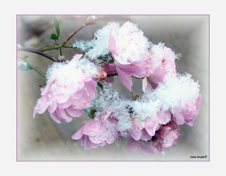 Première neige / Der erste Schnee