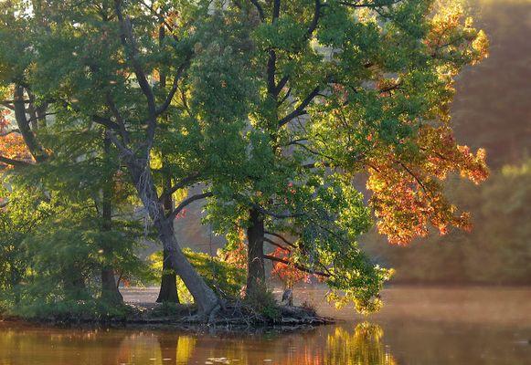 premieres couleurs d'automne aux étangs de comelle