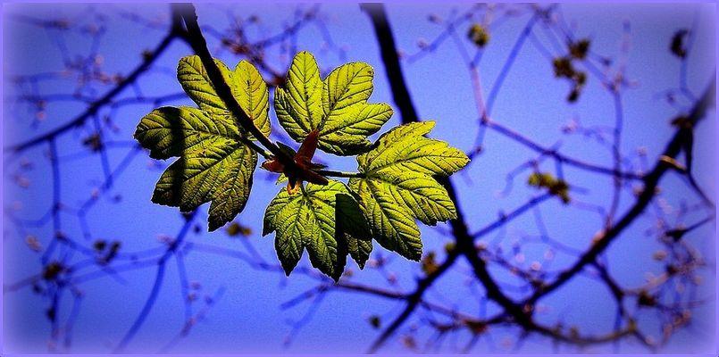 Premières feuilles d'avril