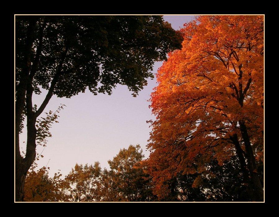 Près de chez moi, chaleur d'automne