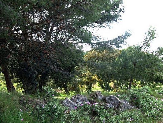 près du Ball trap non loin de Fleury d'Aude