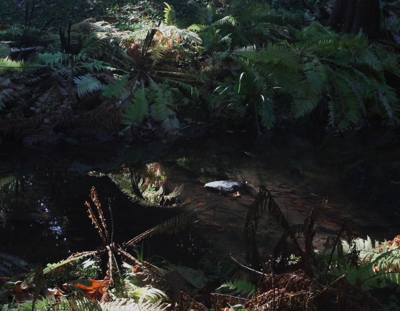Près du ruisseau