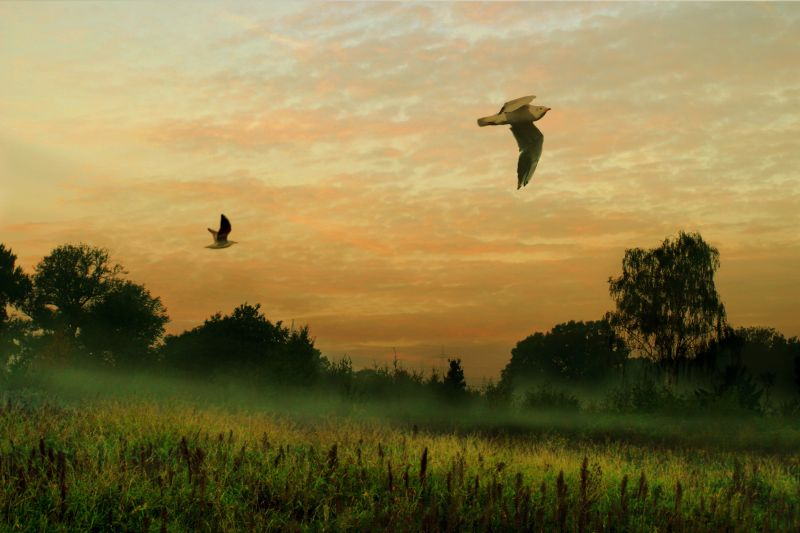 Presentiment of a dawn