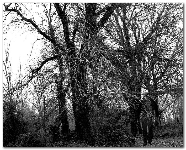 Presenza nel bosco
