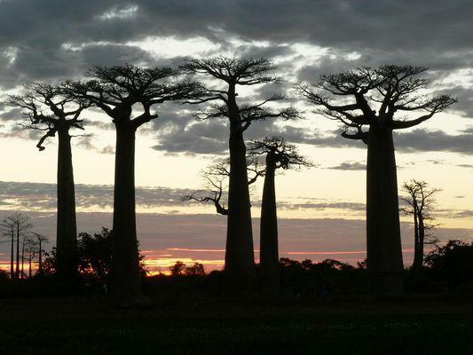 Presque nuit à Morondave (Madagascar)
