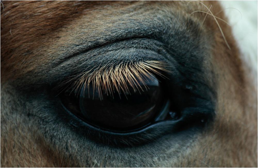 Prettys Auge