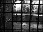 Prigioniero dell'inverno