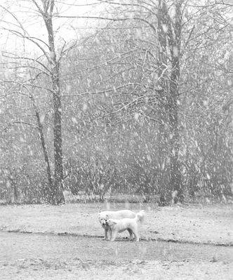 Prima neve per Mina