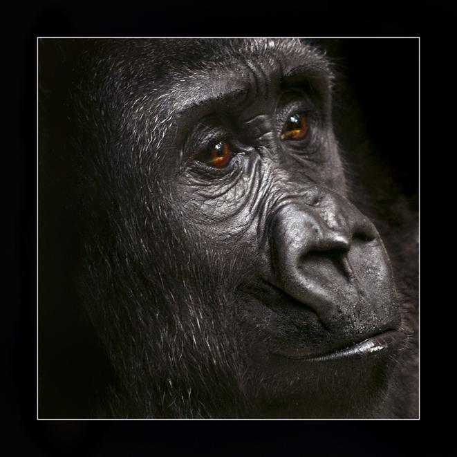 Primat reloaded IV