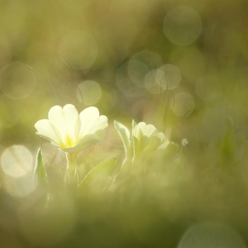 ° primavera °