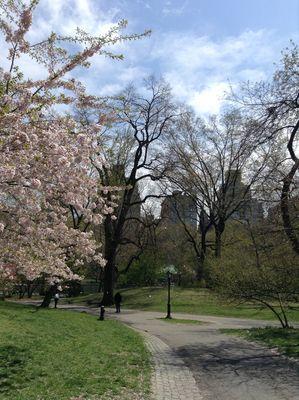 Primavera a Central Park