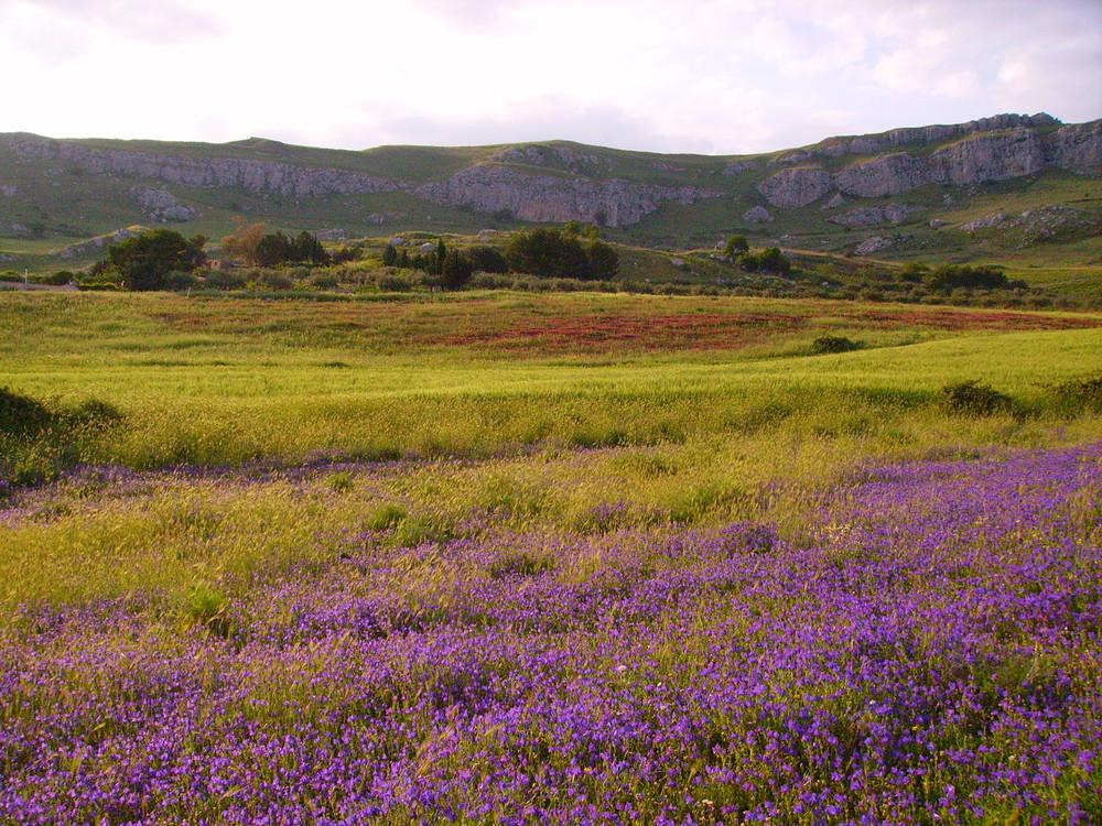 Primavera a Sambuca