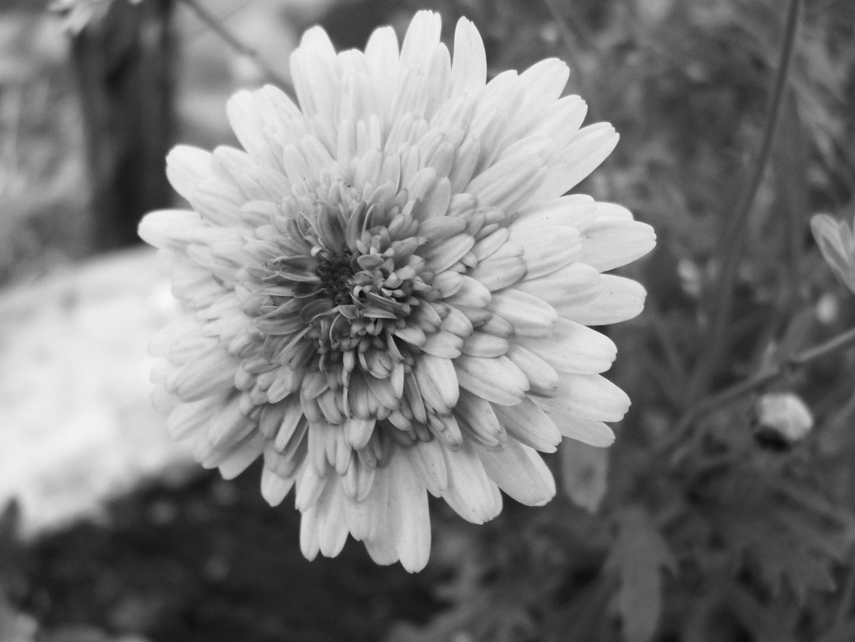 Primavera Anticipada-