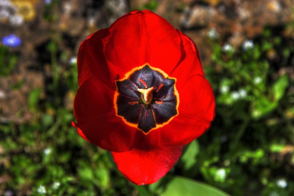 primavera e i suoi colori....