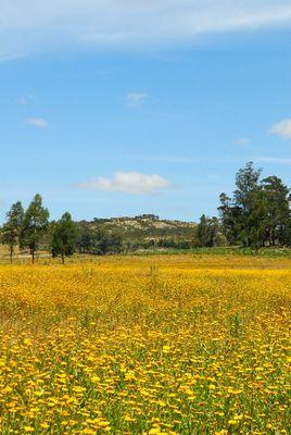 Primavera en el Campo-