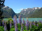 Primavera en los Andes
