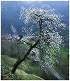 Primavera en Sobrefoz