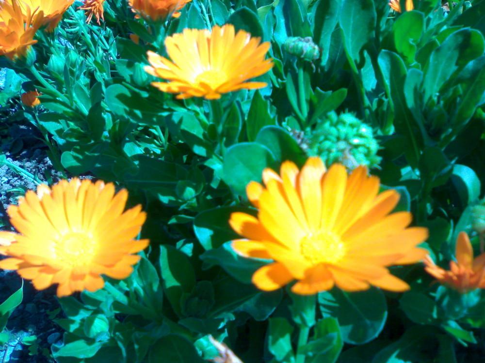 ...Primavera..