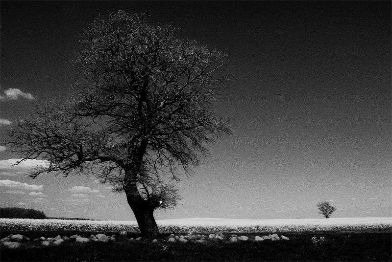 Primavera in bianco e nero foto immagini piante fiori for Foto alta definizione bianco e nero