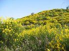Primavera in Sicilia