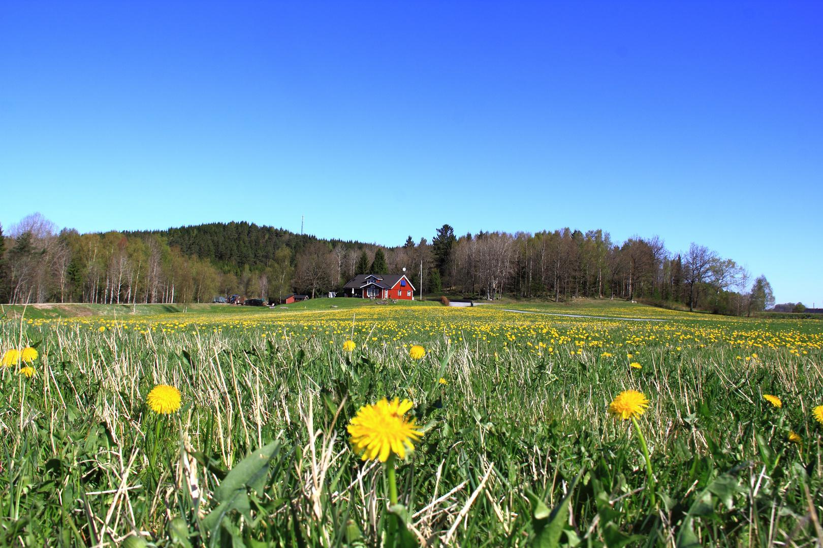 Primavera in Svezia