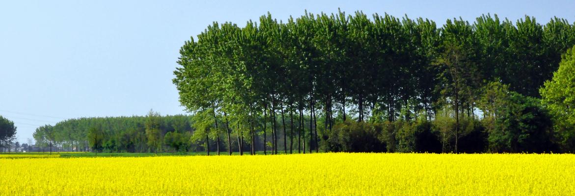 Primavera Lombarda