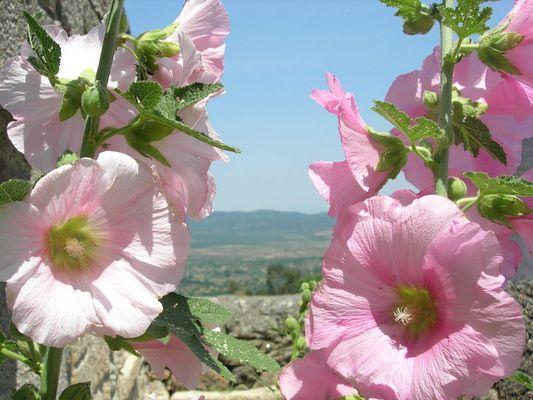 Primavera na Serra