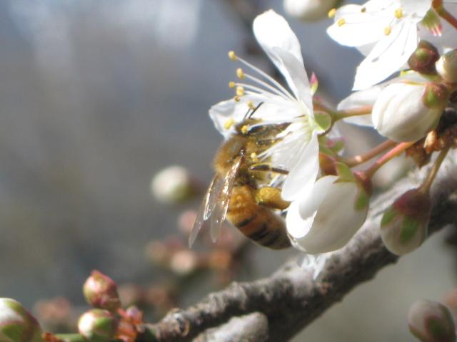 primavera que llega