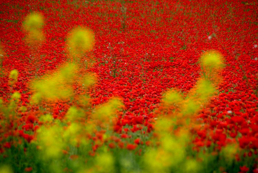 primavera roja 2