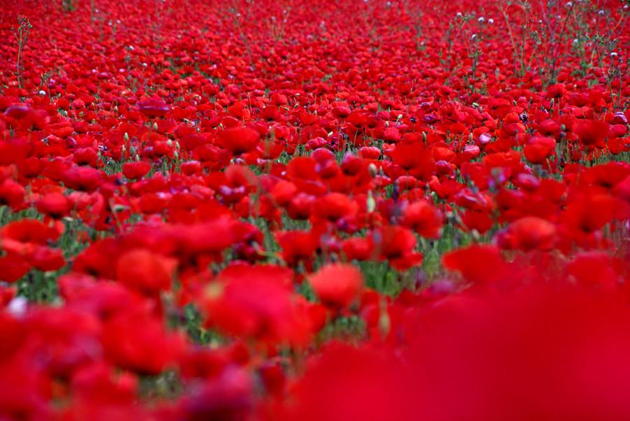 primavera roja 3