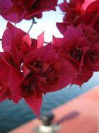 primavera roja en el puerto