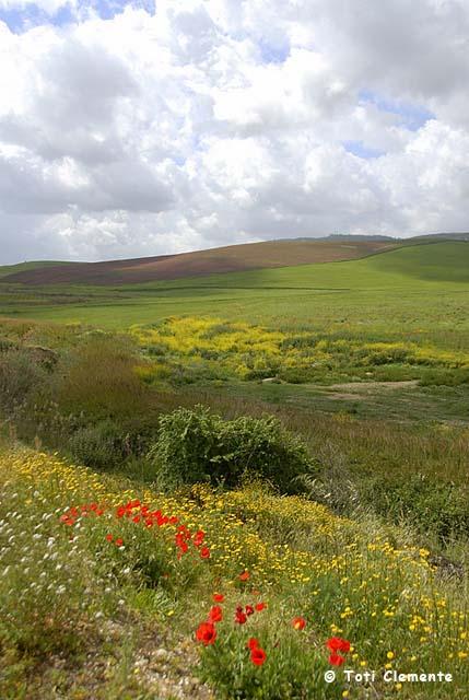 Primavera siciliana