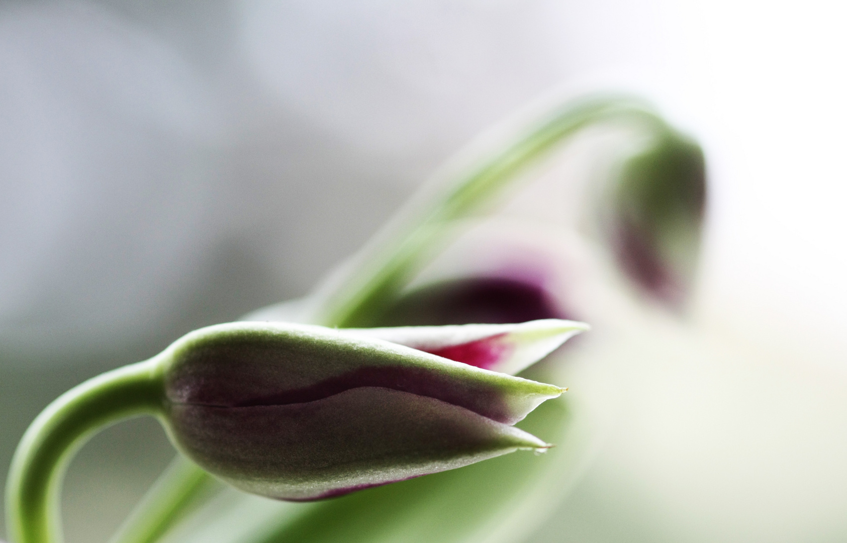 ...primavera....by Nadin