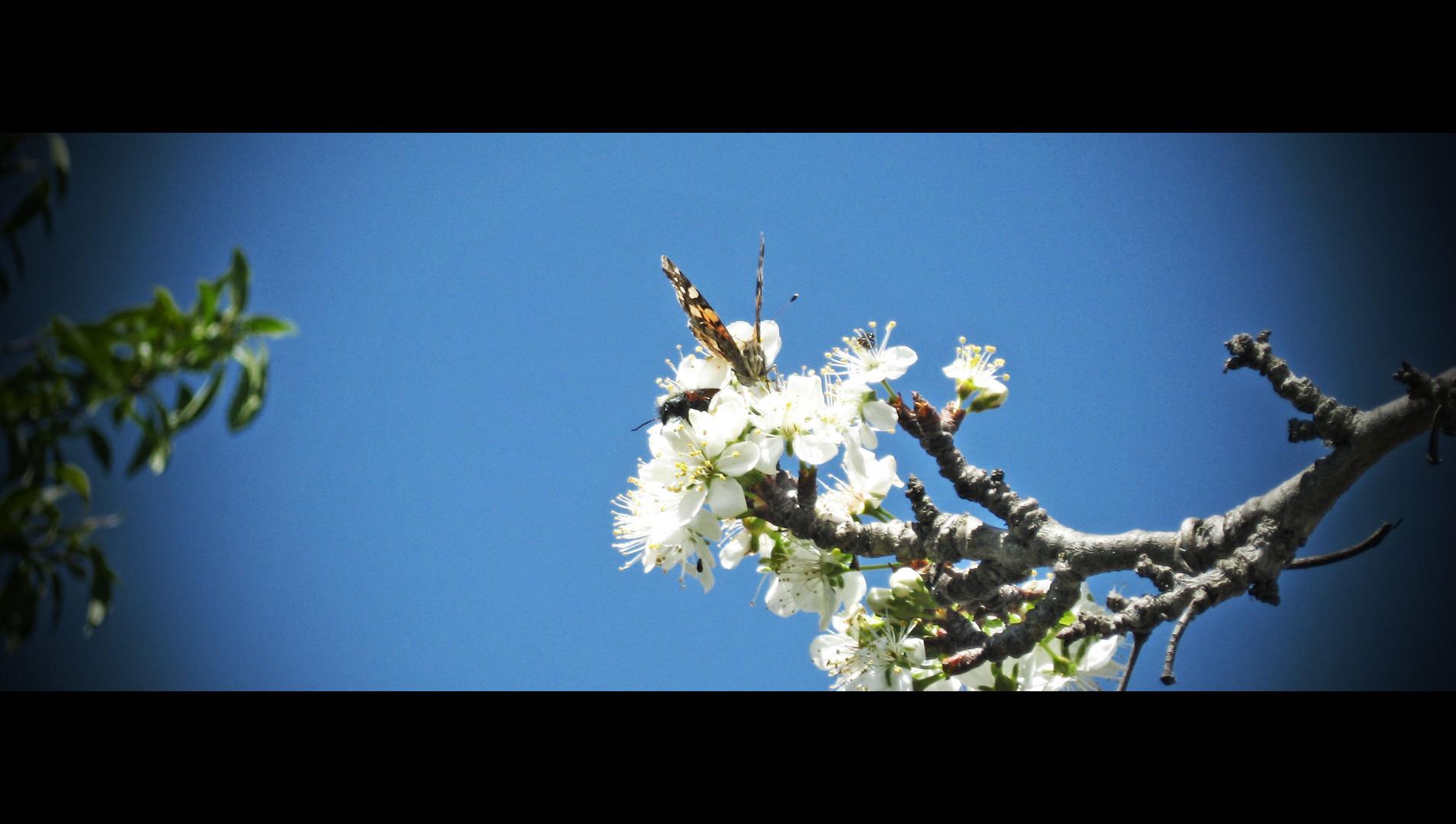 Primaveral !