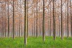 Prime foglie nel boschetto