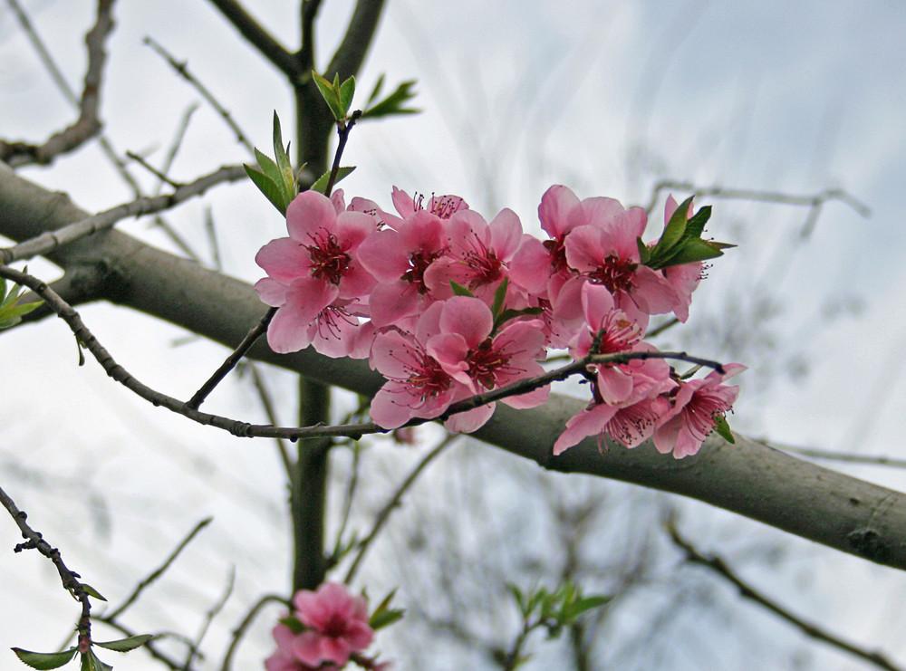 primi fiori