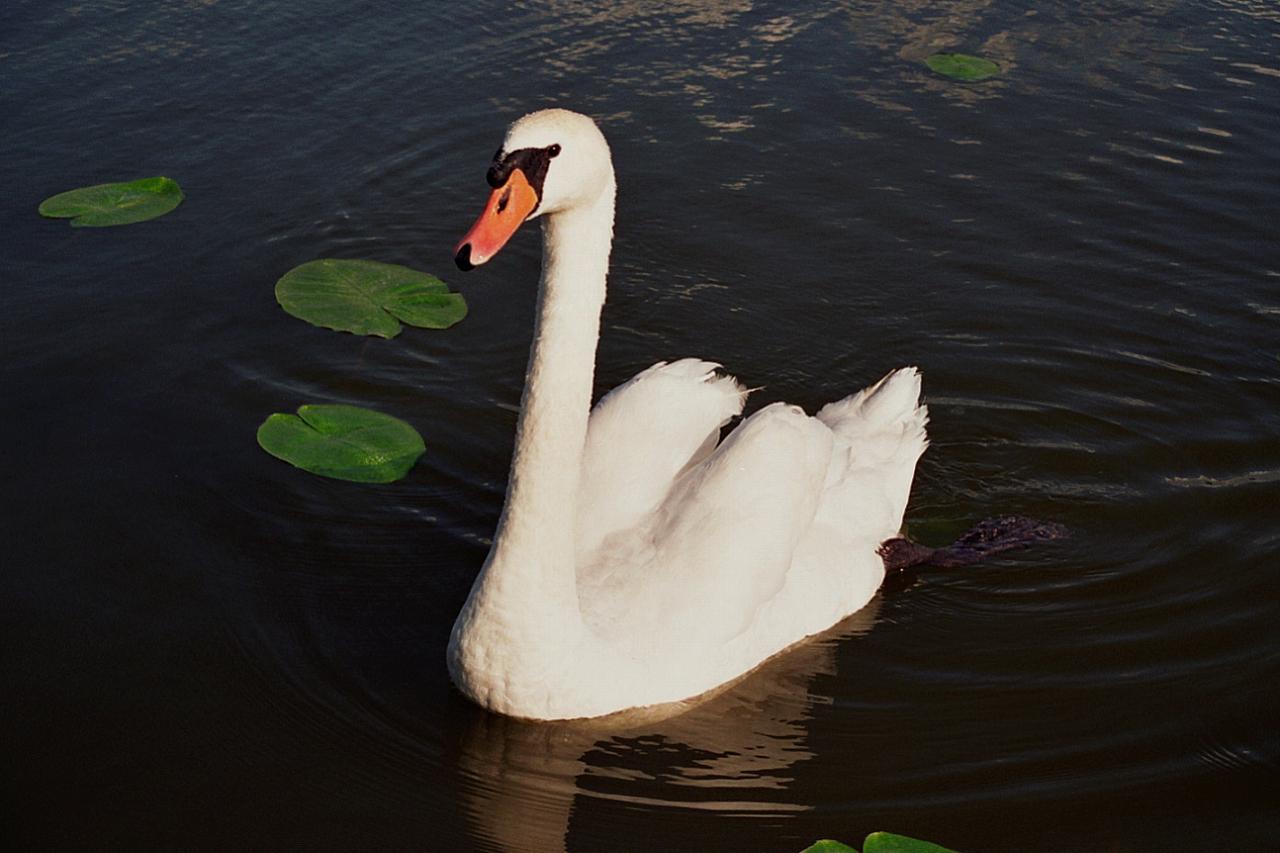 Prince on lake
