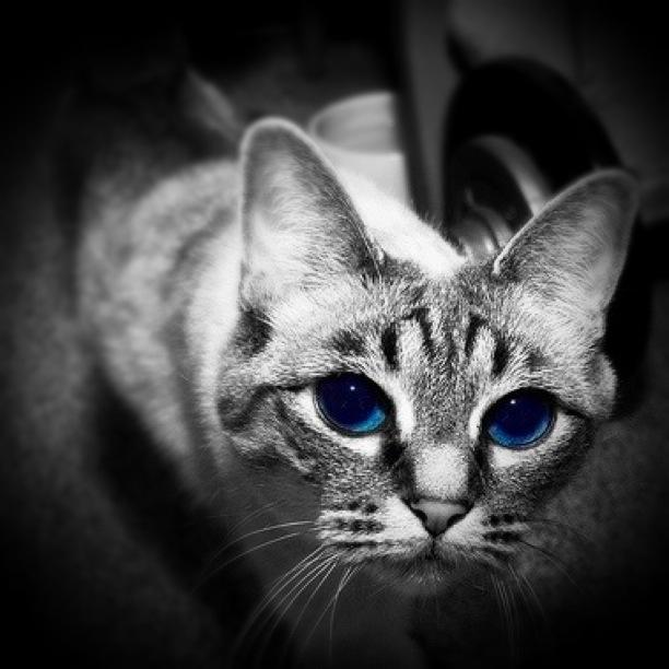 Princess Blueeyes